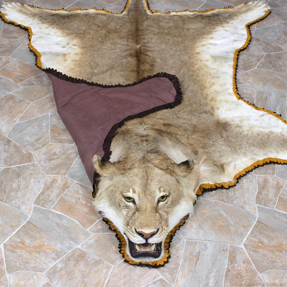 african-lion-rug-taxidermy-mount-a6-_12331-for-sale-_-the-taxidermy-store