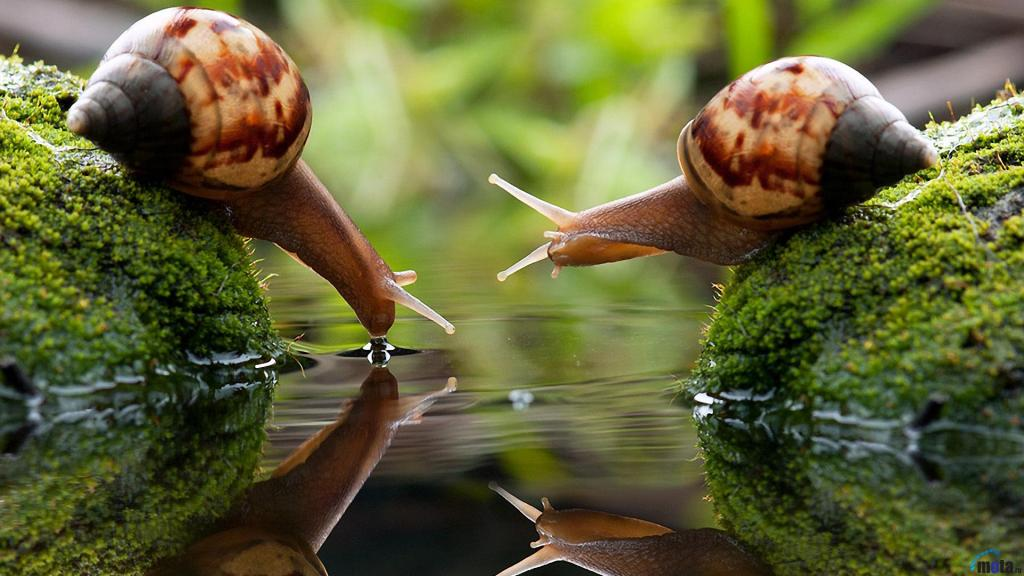 Snails-HD-Wallpapers-4