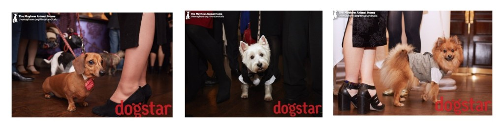 Dogs at Mayhew Tinsel and Tails by Dogstar
