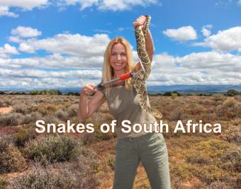 Anneka Svenska - Snakes of South Africa