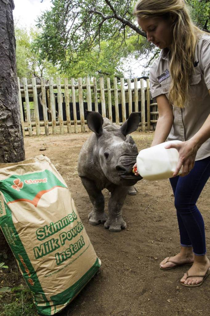 Jade feeding orphaned rhino