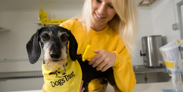 microchipping_dog_dogs_trust