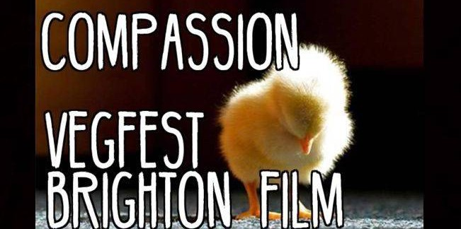 VegFest Presenter Anneka Svenska explores 'compassion' at Bright VegfestUK 2016