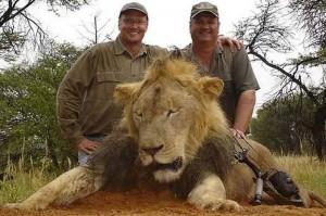 Walter Palmer lion