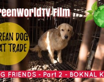 EATING FRIENDS - Boknal Dog Meat Fillm - Korea Anneka Svenska GreenWorldTV