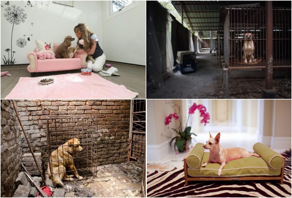 Korean Dog meat poem written by Anneka Svenska #stopboknal