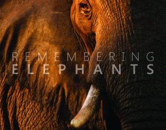 Remembering Elephants by Margot Raggett