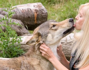 Anneka Svenska with Toraq the wolf