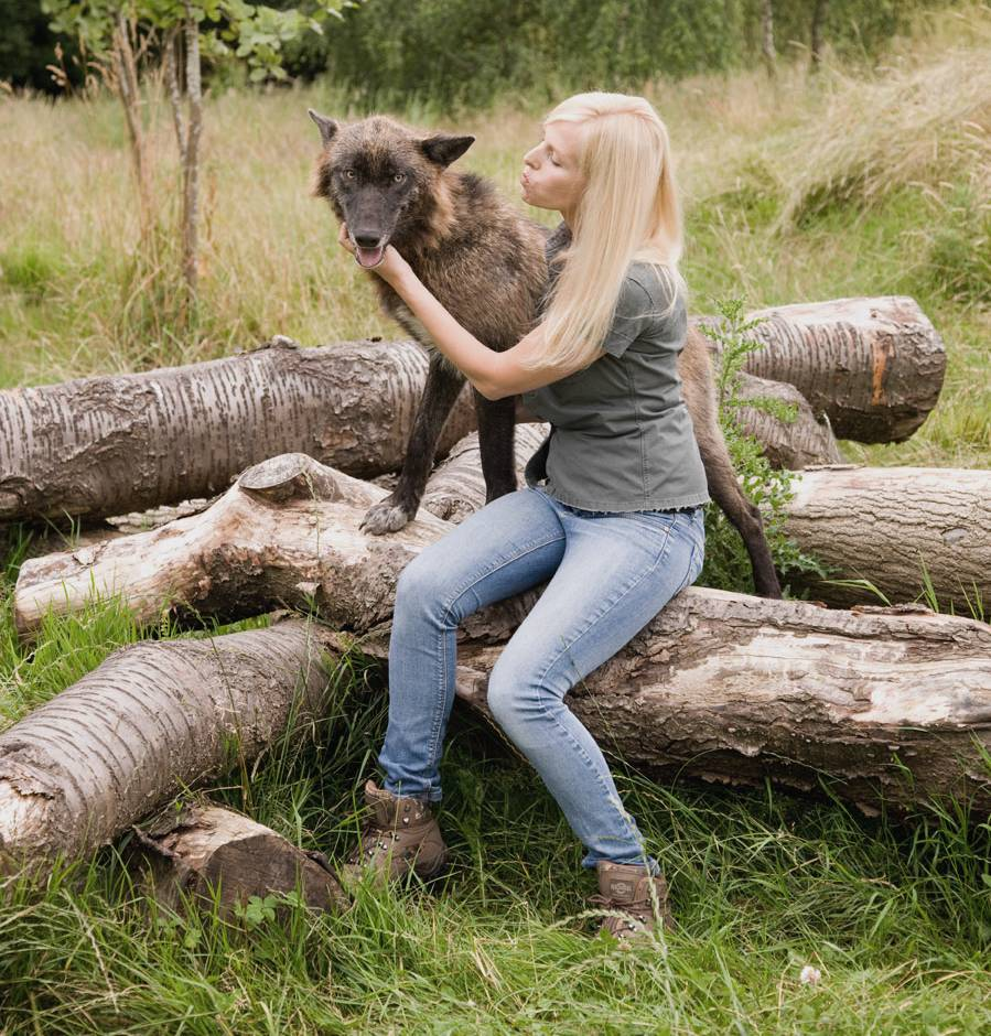 Anneka Svenska with Mai the wolf at The Wolf Conservation Trust